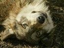 Фотоальбом Светланы Ларионовой