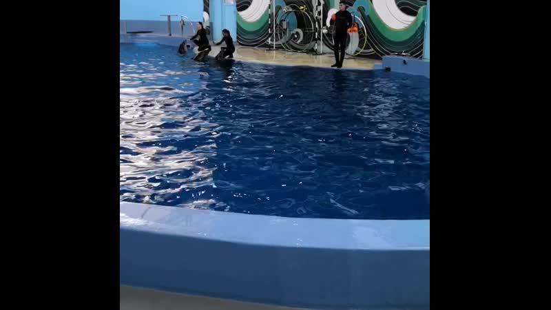 Соло от Дельфинов