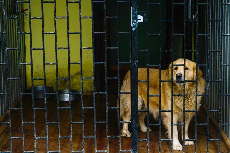Служебная собака в своем вольере