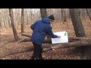 Математика в неожиданных местах: Деревья