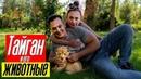 ПАРК ЛЬВОВ ТАЙГАН и его животные Олег Зубков рассказывает про трон Филиппа Киркорова