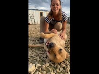 """Видео от Фонд помощи бездомным животным """"Путь домой"""""""