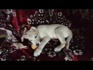 Помощь узникам Сасовского приюта ИП Илюшеня kullanıcısından video