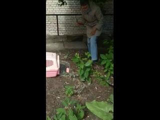 Tatyana Lugovayatan video