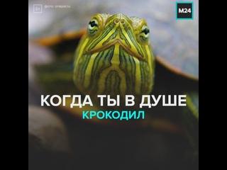 Когда ты в душе крокодил — Москва 24