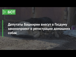 Депутаты Башкирии внесут в Госдуму законопроект о регистрации домашних собак
