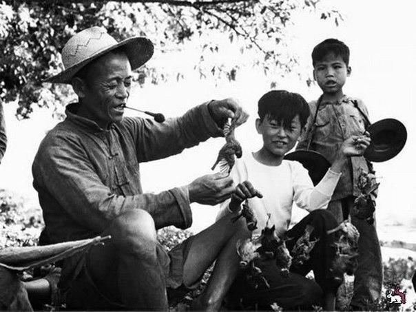 Чем закончилось тотальное уничтожение воробьев в Китае По инициативе Мао Цзэдуна, в Китае в рамках политики Большого скачка (19581962) была организована кампании по уничтожению воробьев.