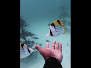 Удивительные жители подводного мира