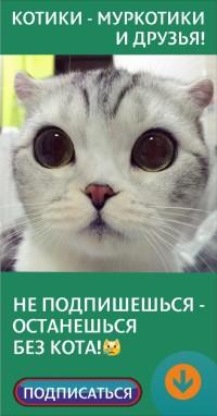 Фото кошки -
