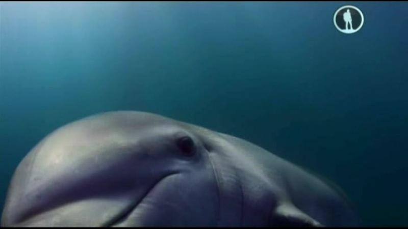 Дельфины Шпион в стае 2 2