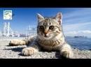 20 фактів про котів