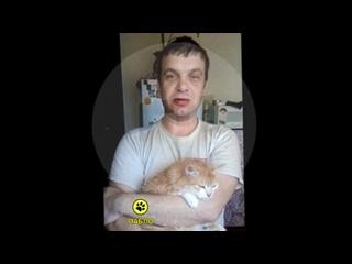 """Житель Перми """"игравший в боулинг"""" кошкой извинился"""