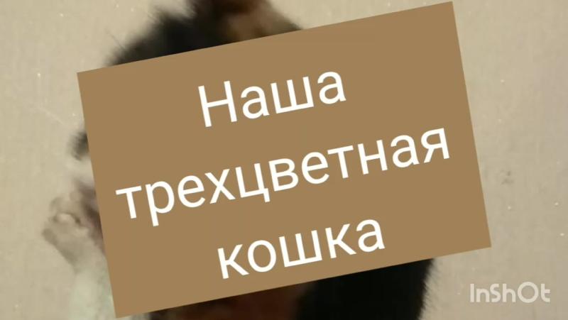 InShot_20201010_225419383.mp4
