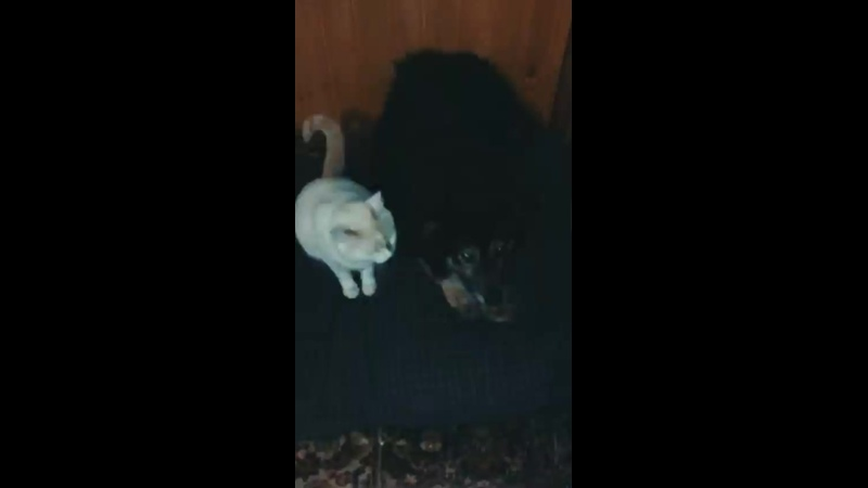 Видео от Волонтерский проект Собака из Бирюлёво