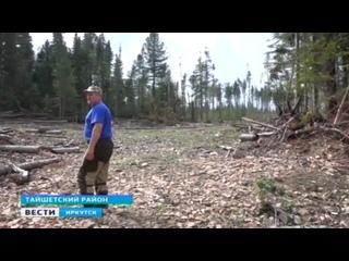 Защитить кедровый лес от вырубки требуют жители посёлка Венгерка в Тайшетском районе