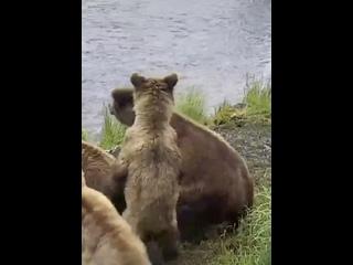 Видео от Народныя Контроля-Рфа