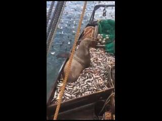 Незваный гость🙈🙈🙈  #ВИДОСЫFisherManNIZHNEVARTOVSK#рыбалка