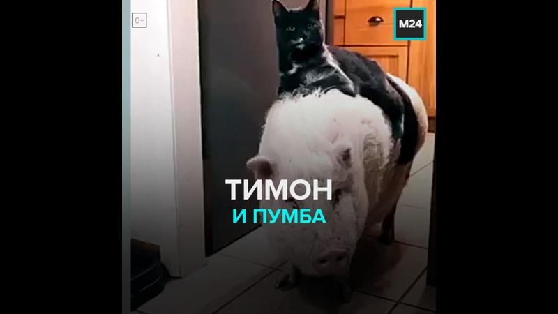Тимон и Пумба Москва 24