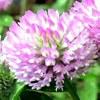 Лекарственные растения - лечебные травы