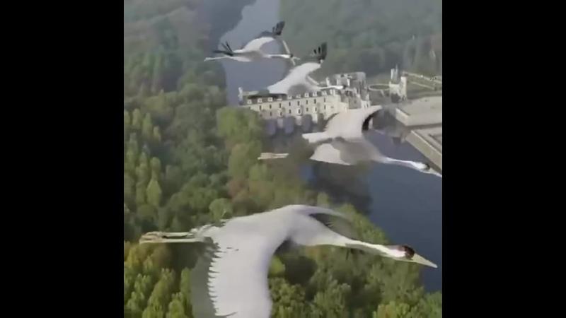 Полет аистов над Версалем