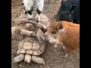 Никакой личной жизни у черепах 😆