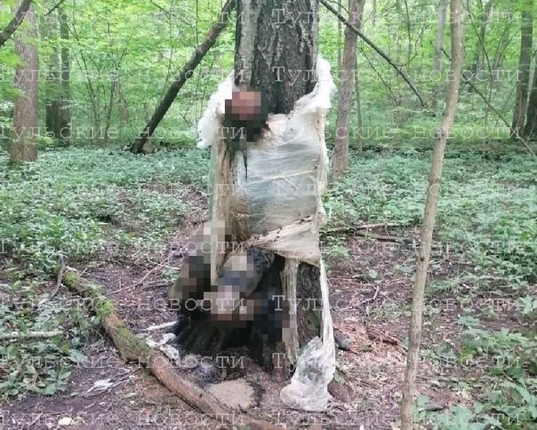 ✅ Дело о трупе, привязанном пищевой пленкой к дереву в ле...