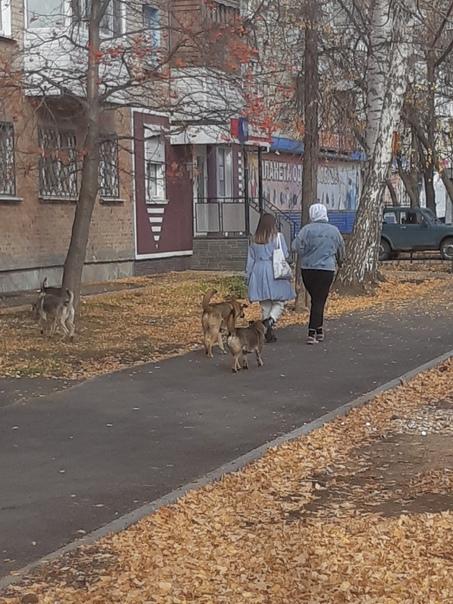 Страшно ходить днём и ночью, столько стай собак я ...