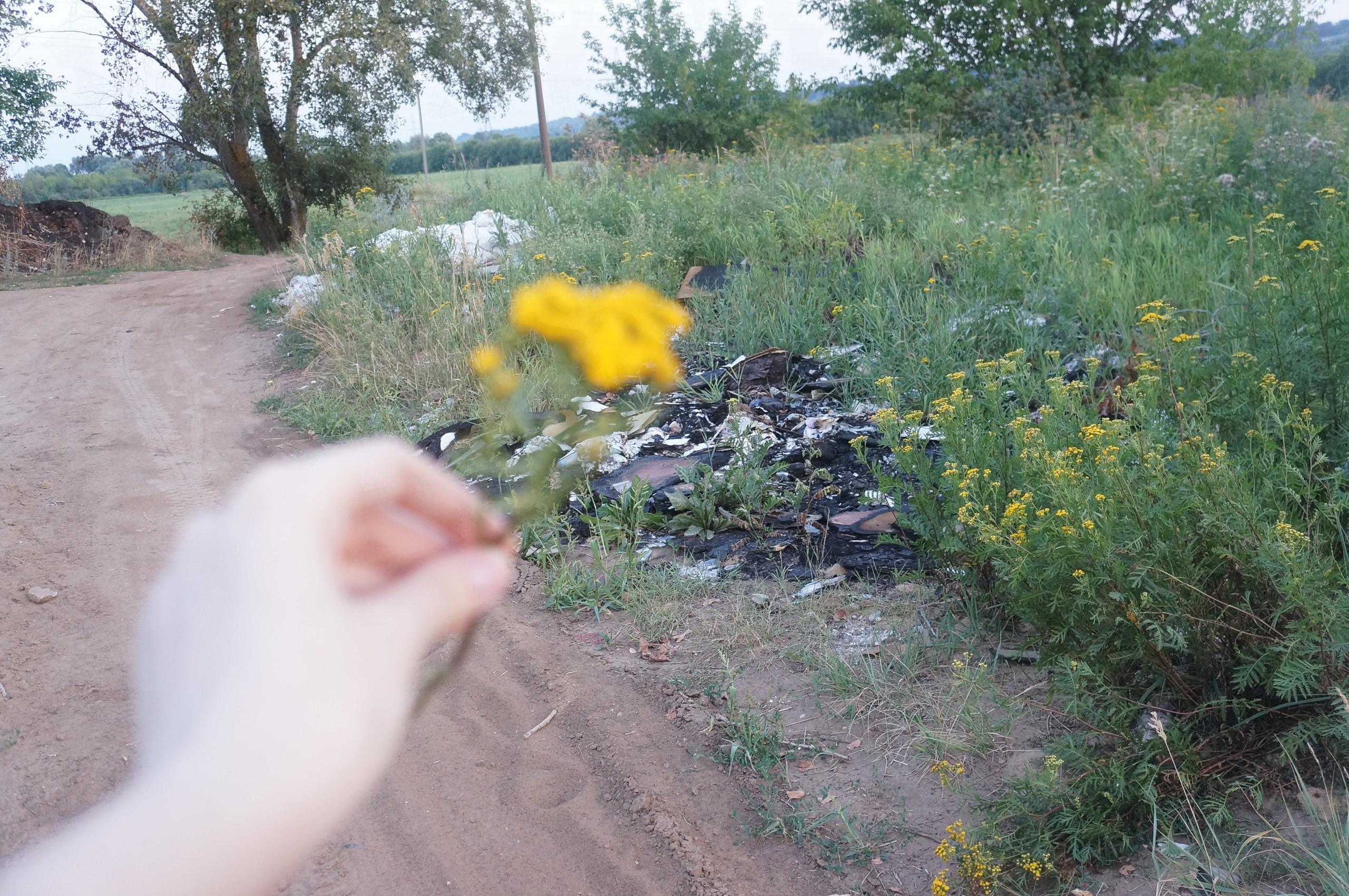 Быть или не быть: появится ли Восточный обход Нижнего Новгорода в Артемовских лугах 6