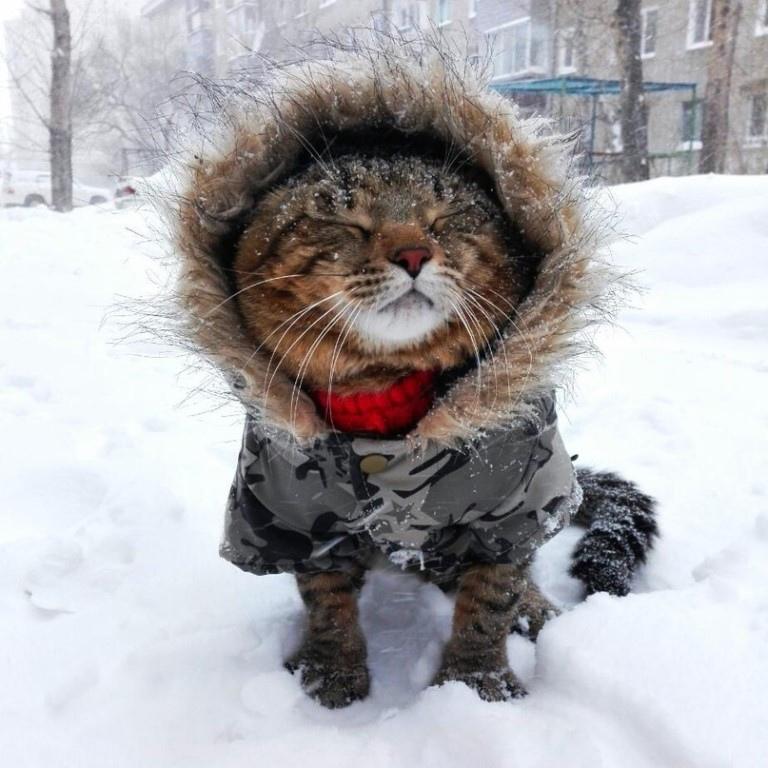 Ой мороз , мороз...