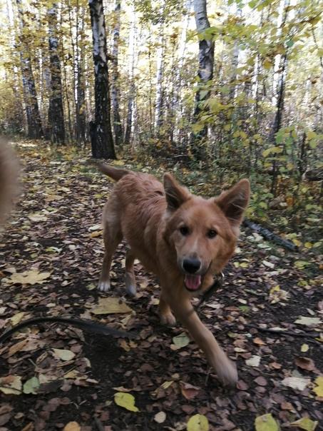 На улице Попова был найден щенок! 🆘Примерно 6-8 месяцев. ...