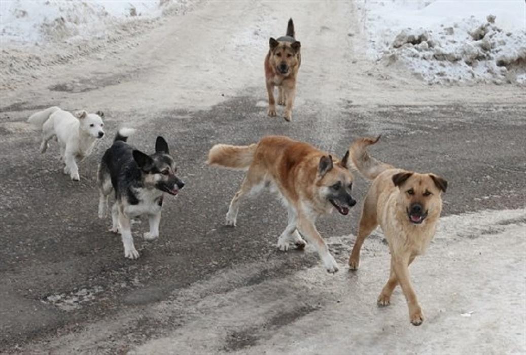 В Дубне на на физика-теоретика из ОИЯИ напали две бродячие собаки