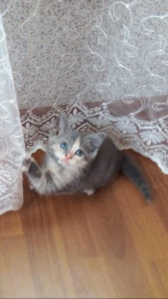 Бездомная кошка принесла котёнка маленького , толь...