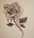 drawings of roses - 736×820