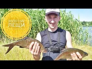 Золотые лещи или как добывалась победа... #рыбалка #фидер #дон