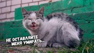 Спасение котика с раной на шее / SANI vlog