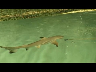 С днём рождения, малышка акула!