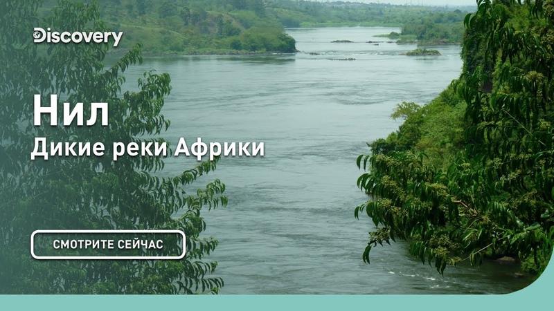 Нил Дикие реки Африки Discovery