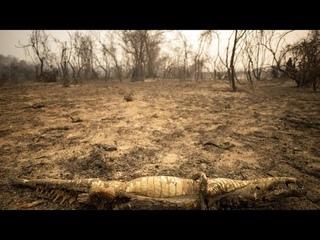 Amazónia lángokban