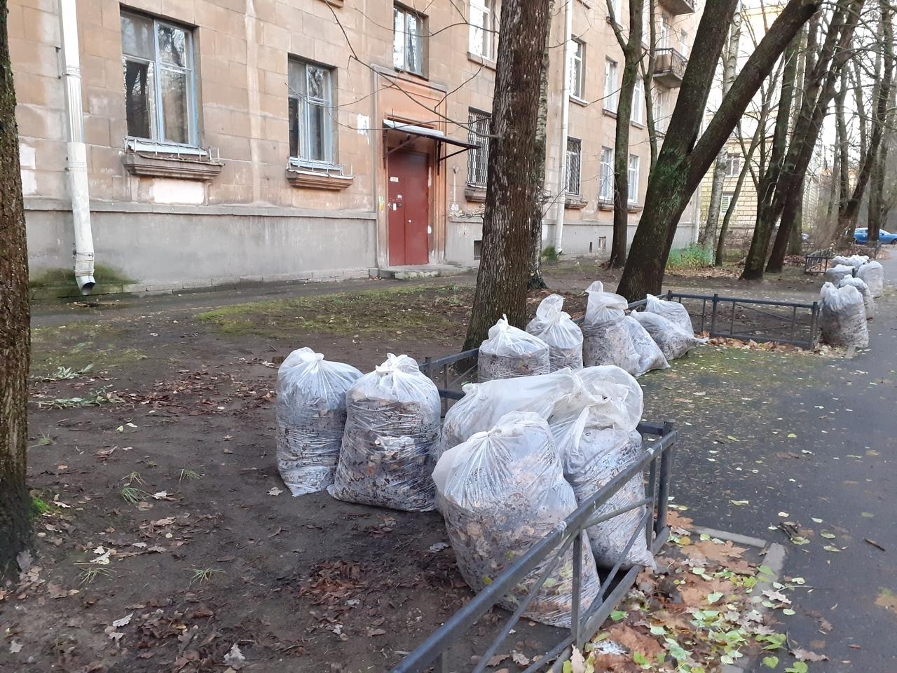 Позорище Петербурга. Сбор листьев с газонов - удар по природе. И все это за счет налогоплательщиков