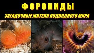 ФОРОНИДЫ - Загадочные жители подводного мира