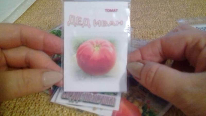 Опять семена томатов ! Томаты из Латвии.